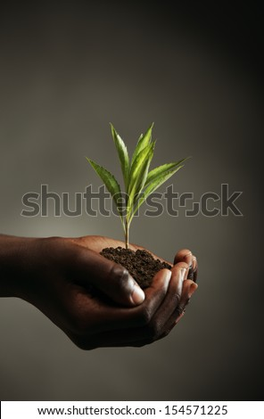 African boy with seedling in his hands, close up - stock photo