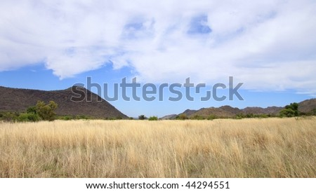 African bush landscape - stock photo