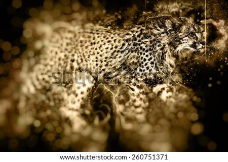 African cheetah illustration  - stock photo