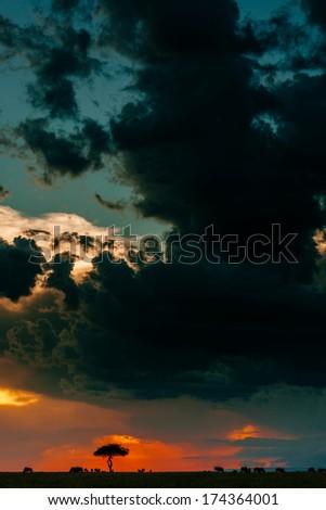african dusk - stock photo