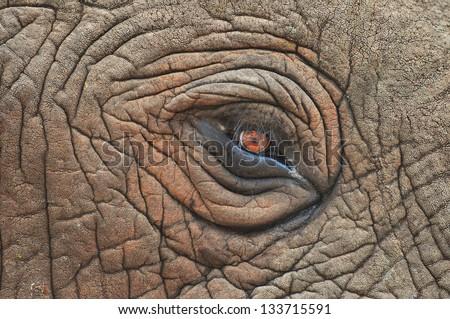 African Elephant - stock photo
