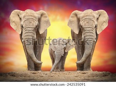 African elephant family on the road.  - stock photo