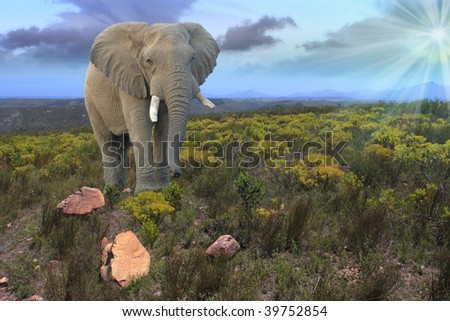 african elephant in landscape with bush and mountains