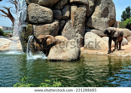 African elephant in natural environment standing under the waterfall. Bio Park in Valencia, Spain. - stock photo
