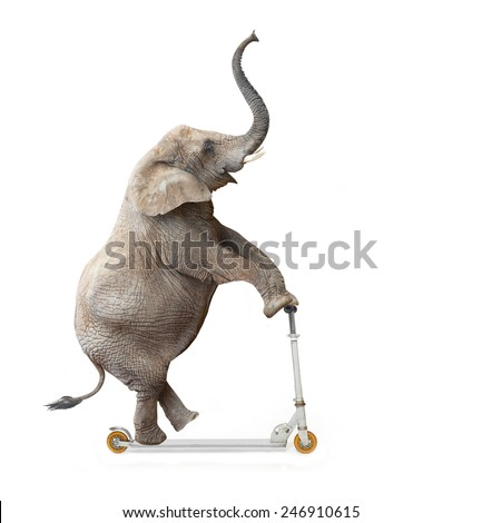 African elephant (Loxodonta africana) riding a push scooter.  - stock photo