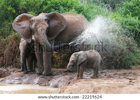African elephant mother and baby cooling off at a water hole - stock photo