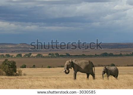 African elephant mother and calf in Masai Mara - stock photo