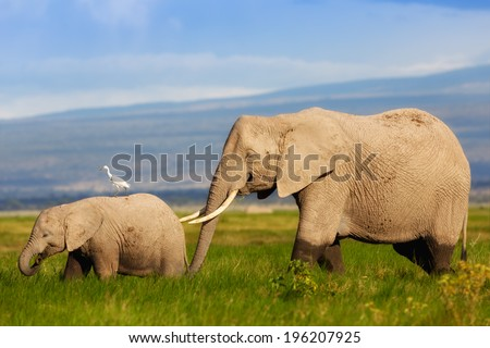 African Elephant mother with her calf in the swamps of Amboseli National Park, Kenya - stock photo