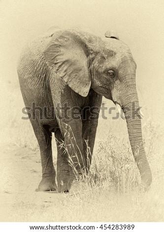 African elephant on the Masai Mara National Reserve, Kenya (stylized retro) - stock photo