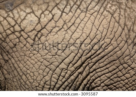 African elephant skin close-up, South Africa - stock photo