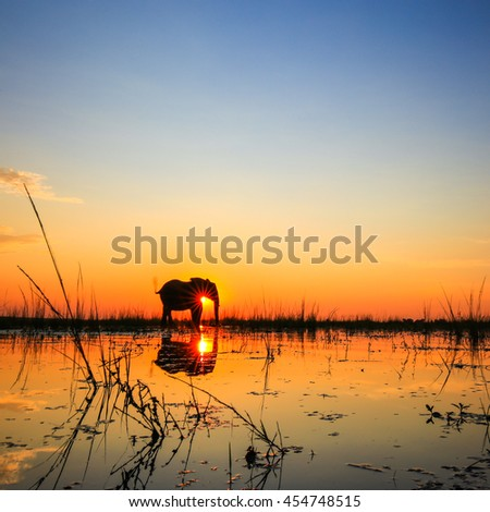 African elephant standing in river at sunset with water reflection, Africa - stock photo