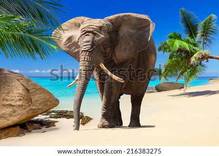 African elephant walking on tropical beach - stock photo