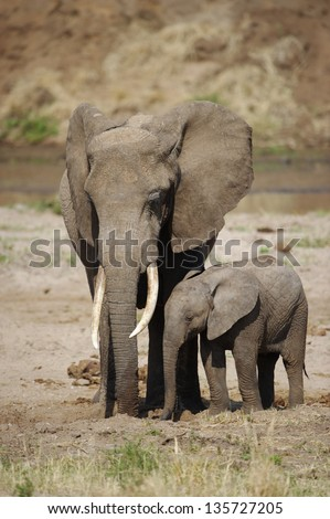 African elephant with baby - stock photo