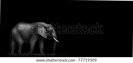 African Elephant with black background - stock photo