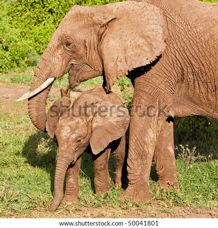 African elephant with its baby in Lake Manyara National Park, Tanzania - stock photo