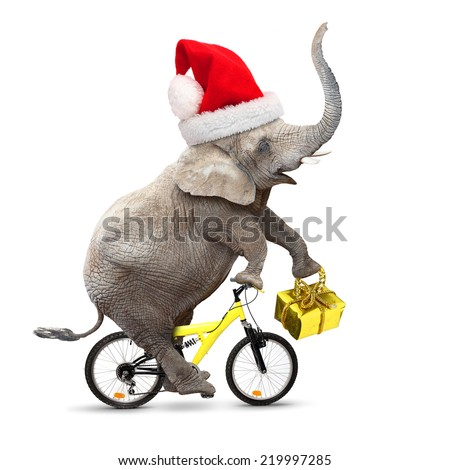 African elephant with santa's cap riding a bike. Christmas gifts for all.  - stock photo