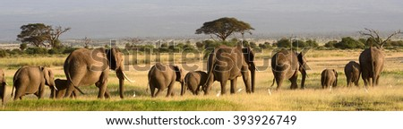 African elephants, Amboseli National Park, Kenya - stock photo