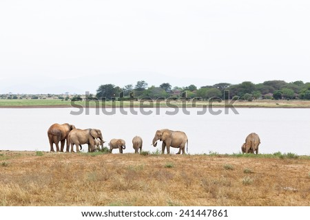 African Elephants at a lake in Tsavo East National Park in Kenya.