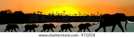 African elephants in a Zambezi sunset - stock photo