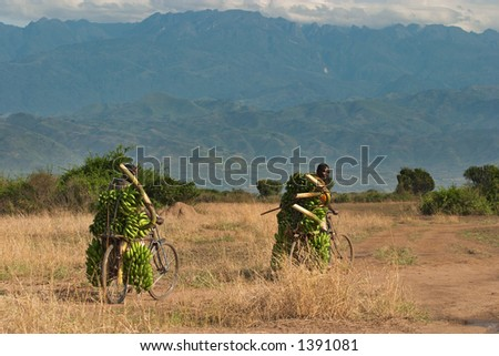 African farmers with a bananas - stock photo