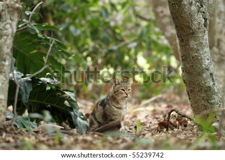 African Feral Cat camouflaged - stock photo