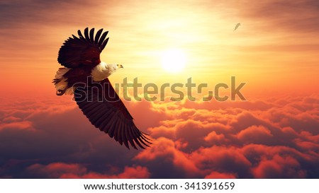 African Fish Eagle flying high above the clouds with sunrise (Digital artwork) - stock photo