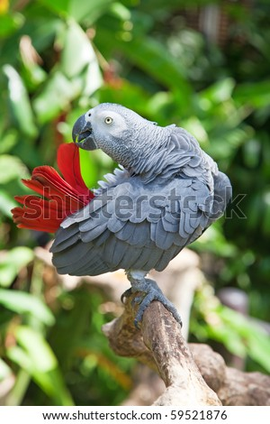 African grey parrot in the jungle - stock photo