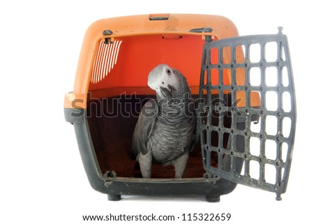 African Grey Parrot ,Psittacus erithacus in a kennel in front of white background - stock photo