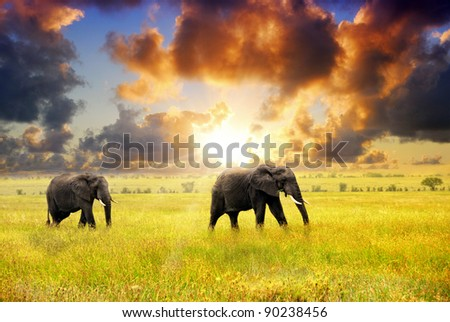 African landscape. African elephants at sunset in the savannah, Serengeti, Tanzania - stock photo