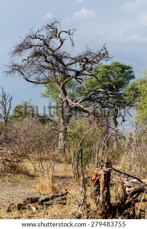 African landscape in national park nambwa on Caprivi Strip Namibia - stock photo