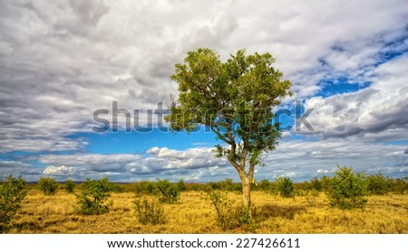 African landscape in the Kruger National Park, South Africa - stock photo