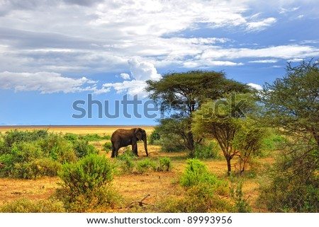 African landscape. Lonely elephant in the Manyara lake national park, Tanzania - stock photo