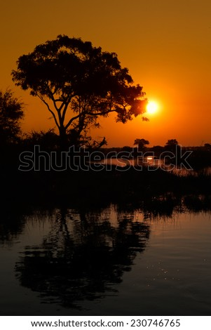 African landscape with an tree reflected in water at sunset, Kwando river, Namibia - stock photo