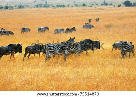 African landscape with antelopes gnu and zebras - stock photo