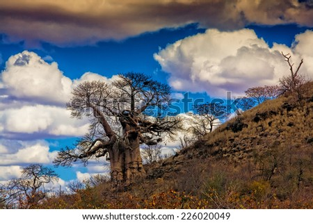 African landscape with baobab tree in Kruger National Park, South Africa - stock photo