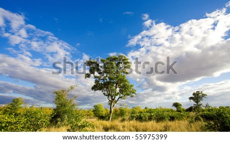 African landscape with dramatic clouds in Kruger National Park, South Africa - stock photo