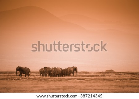 African landscape with herd elephants