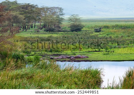 African landscape with hippo family resting near the lake - stock photo