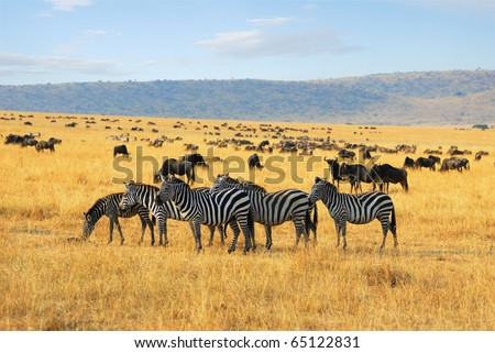 African landscape with zebras and antelopes gnu - stock photo