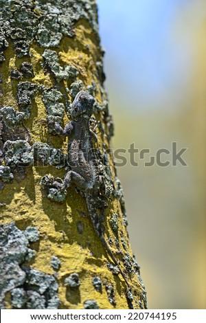 African Lizard in savannah on a tree near the lake Naivasha - stock photo