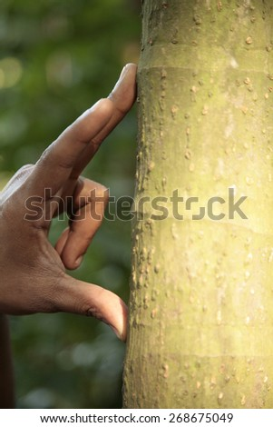 African man's hand measuring a tree trunk - stock photo