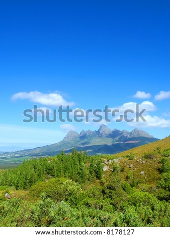 African pine forest and amazing group of mountains as a background. Shot in Hottentots Holland Mountains, Vergelegen area, near Somerset West, Western Cape, South Africa. - stock photo