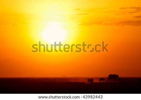 African plain at sunset