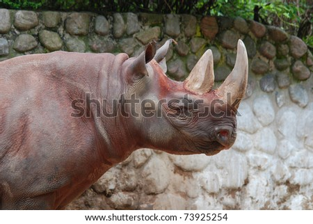 African rhinoceros - stock photo