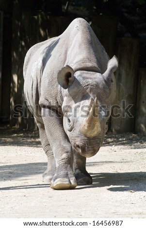 African rhinoceros in Zurich Zoo - stock photo