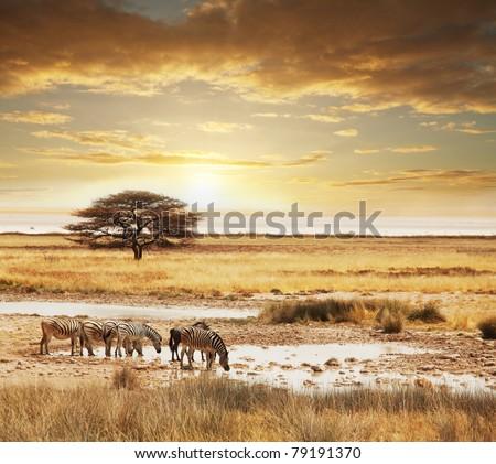 african safari - stock photo