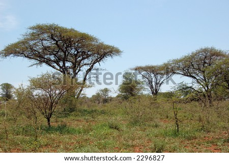 African savanna - stock photo