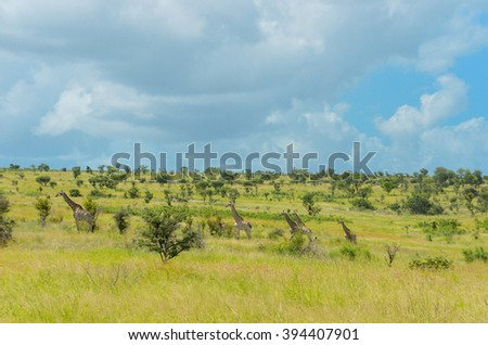 African savanna landscape with animals, South Africa  - stock photo