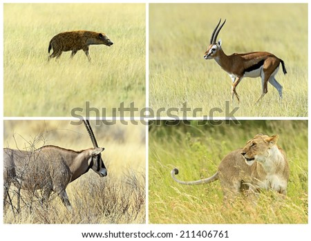 African savannah mammals in their natural habitat - stock photo