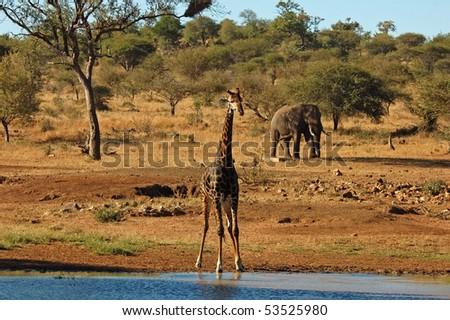 African scenic - stock photo